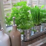 Free For All Friday:  Mason Jar Herb Garden