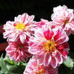 Patio and Deck:  Adding Pops of Summer Colour