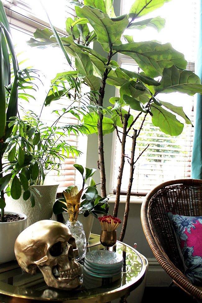 Love the look of fiddle leaf fig tree's? Check out where I've picked up the perfect one for my home!