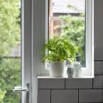 Around the House: Plants Aplenty