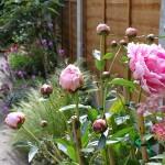 How does your garden grow? Garden on a Roll – Ten Months Later