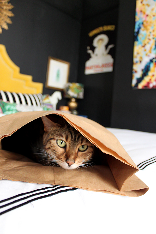 Bengal in a bag on the bed (weirdo)