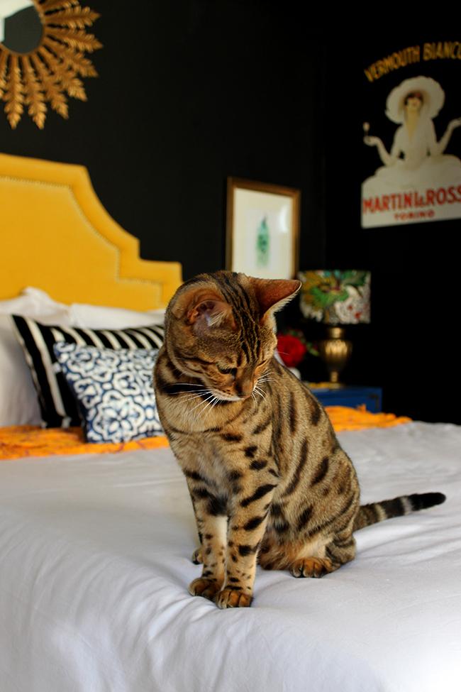 Bengal in black bedroom Meisha Swoon Worthy