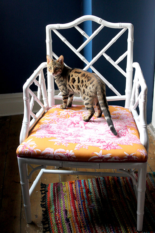 Swoon Worthy - white chippendale faux bamboo chair with bengal cat