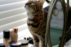 Swoon Worthy - Dressing Room Tour - Meisha bengal cat with makeup display vanity