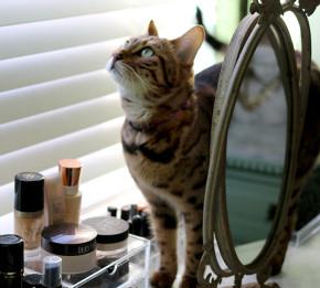 Swoon Worthy - Dressing Room Tour - Meisha bengal cat with makeup display vanity