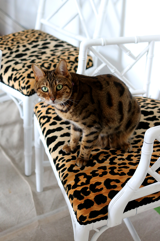Bengal cat on leopard print jamil natural fabric faux bamboo chippendale chairs - see more at www.swoonworthy.co.uk
