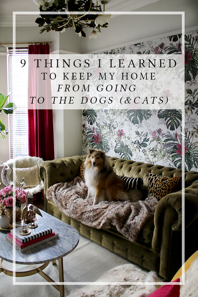9 Things I learned to keep my home from going to the dogs
