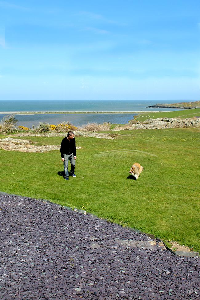 Cemlyn Bay Wales - sheltie