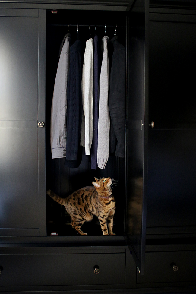black wardrobe with bengal cat inside - see more on www.swoonworthy.co.uk