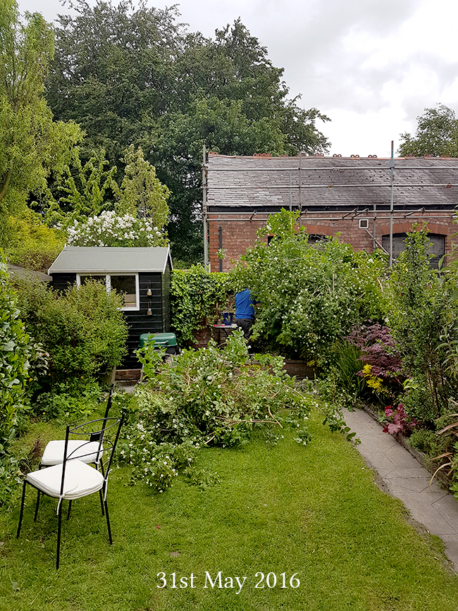Back of the garden on 31 May 2016