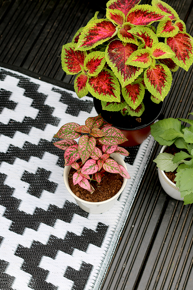 black and white graphic outdoor rug with plants