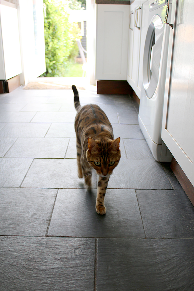 Meisha bengal cat on slate kitchen floors