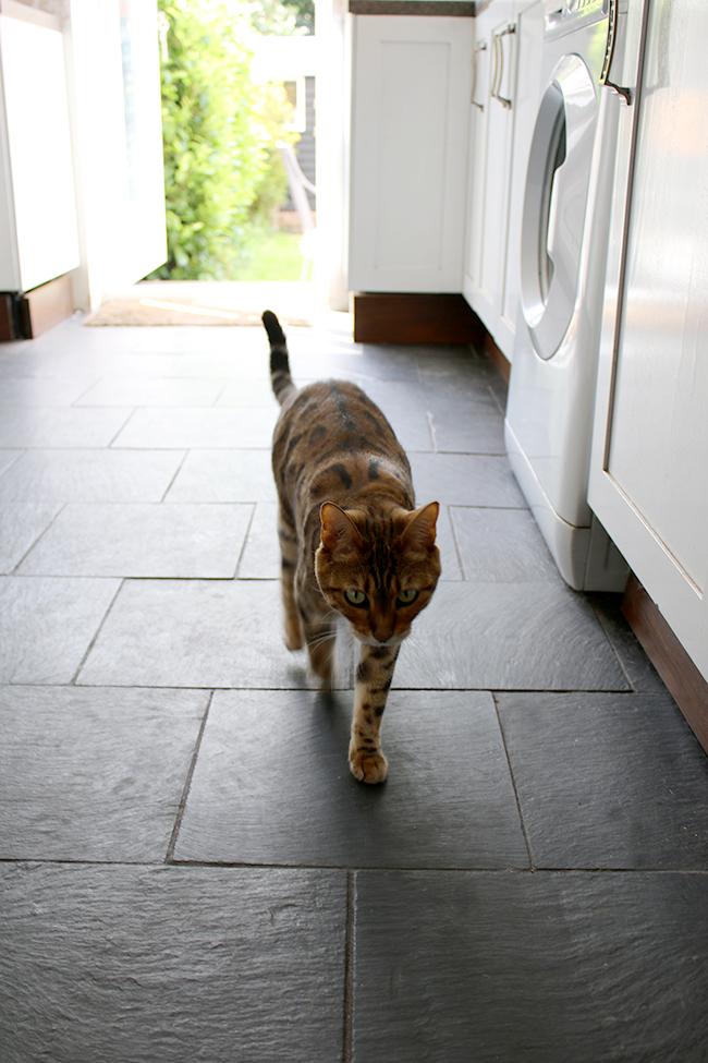 Meisha bengal cat on slate kitchen floors