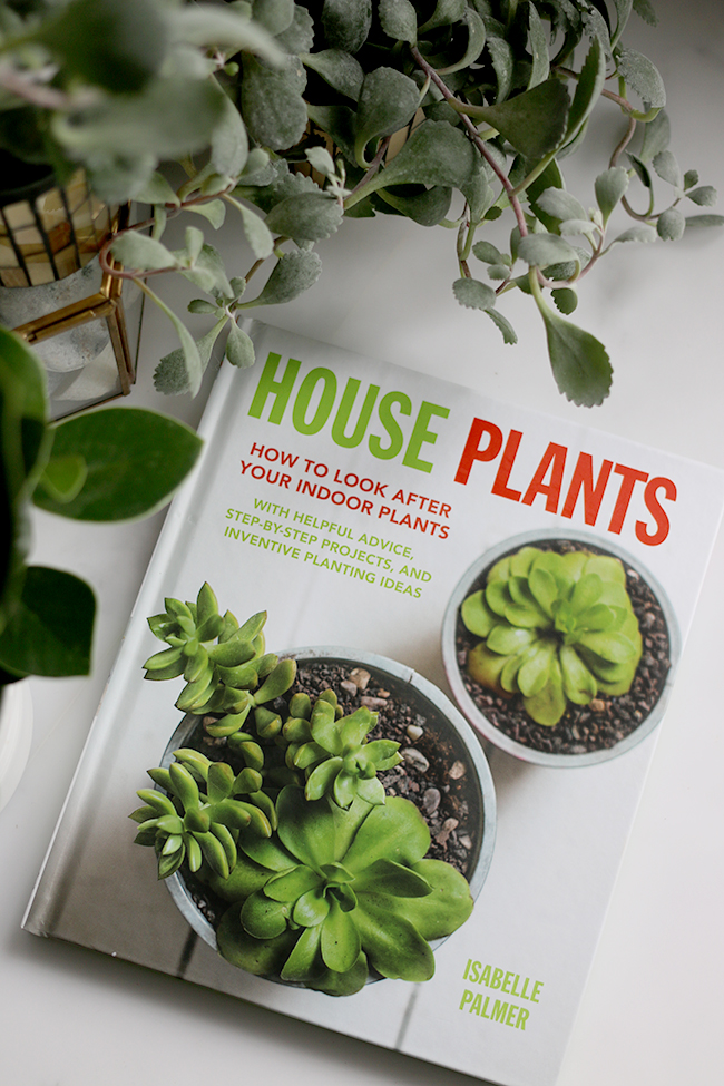 House Plants How to Look After Your Indoor Plants Isabelle Palmer