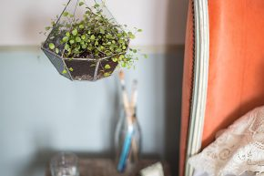 Hanging Containers - House Plants How to Look After Your Indoor Plants Isabelle Palmer by Cico Books