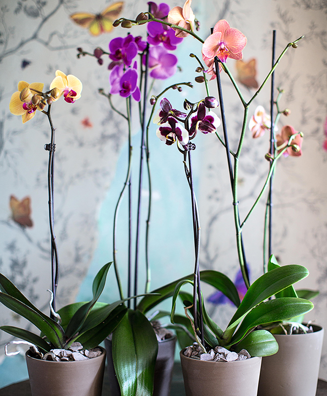 Orchids - House Plants How to Look After Your Indoor Plants Isabelle Palmer by Cico Books