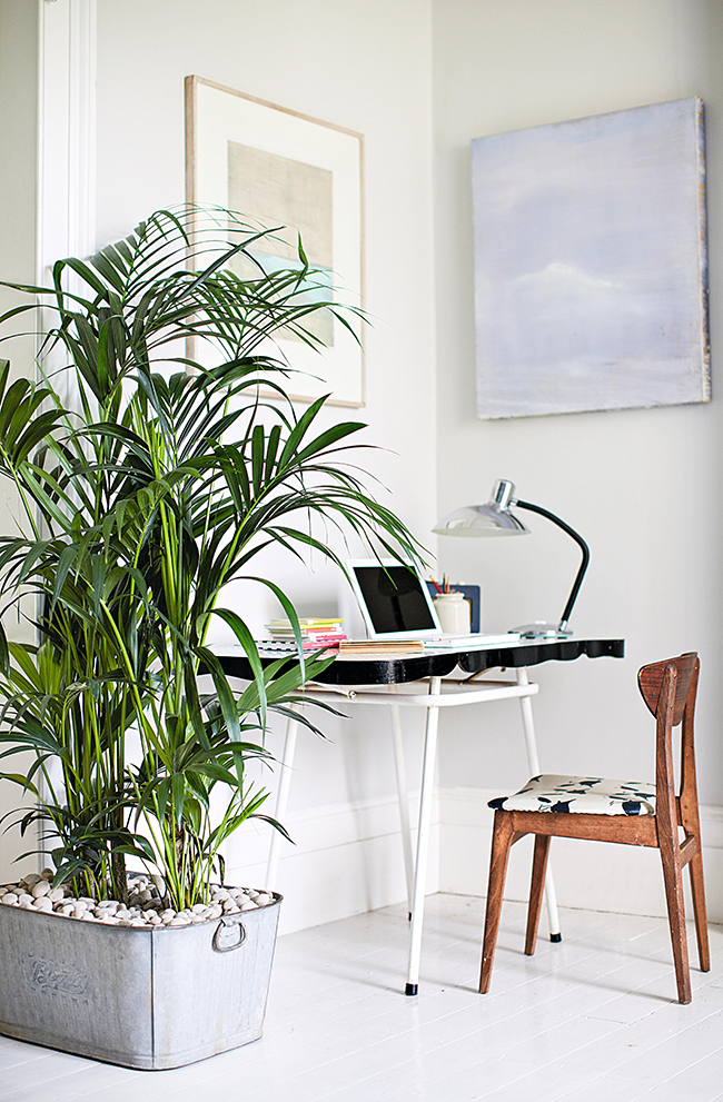 p92 - House Plants How to Look After Your Indoor Plants Isabelle Palmer by Cico Books