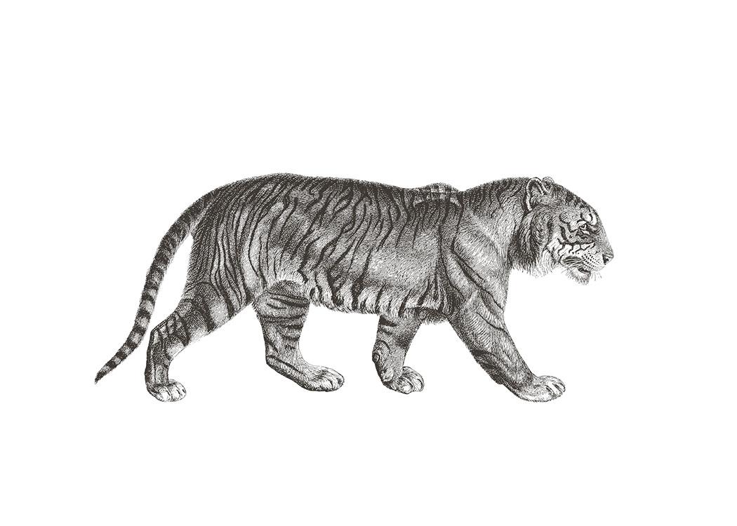 Desenio Art Print Tiger 50x70