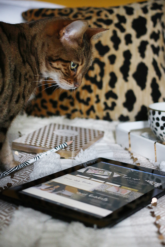 bengal cat on bed with tablet coffee and tray