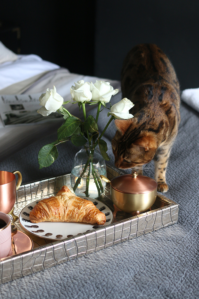 how to get the hotel look at home - breakfast in bed with bengal cat