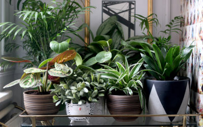 How to Style Your Home with Plants