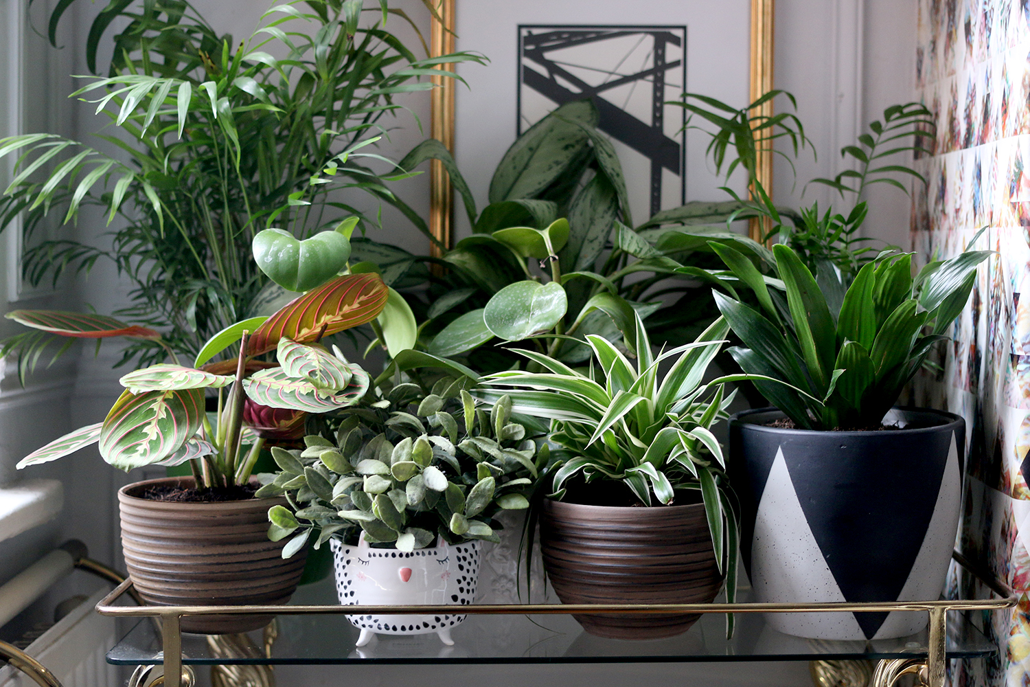 How to Style Your Home with Plants - Swoon Worthy Indoor House Plant String Of Pearls Html on succulents string of pearls, golf string of pearls, flower string of pearls,