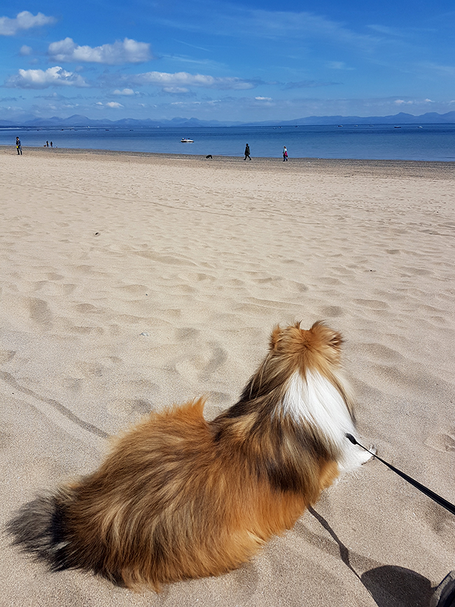 Abersoch dog friendly beach 2