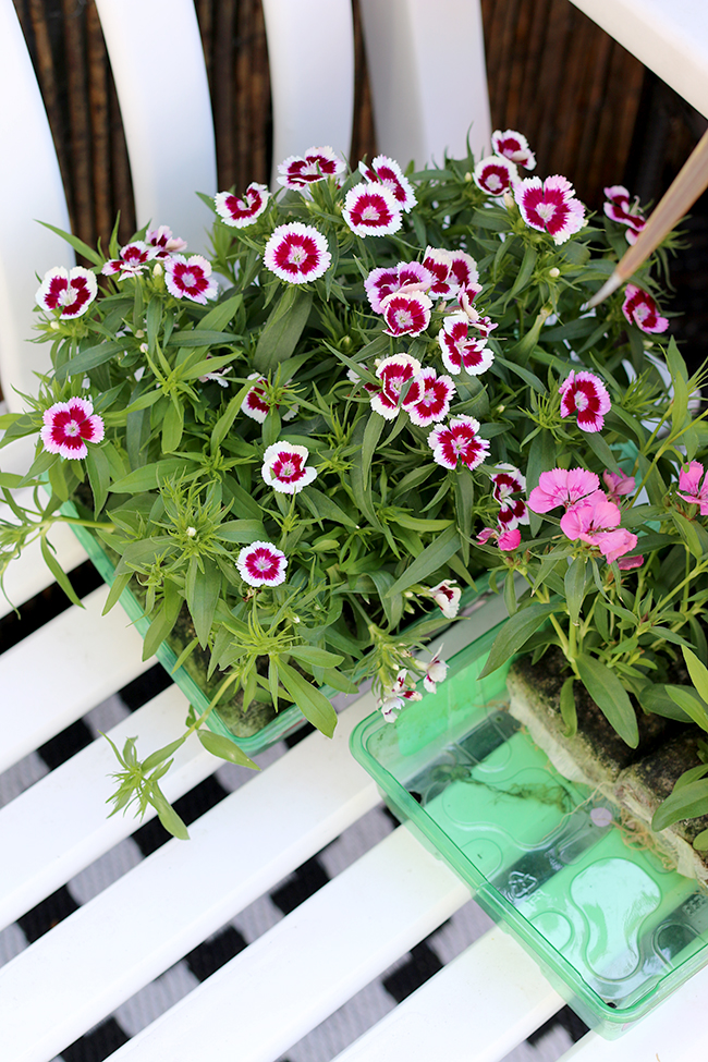 updates on the garden preparing it for summer