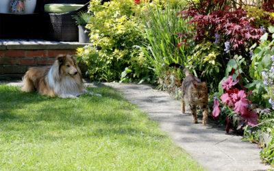 Getting the Garden Summer Ready!