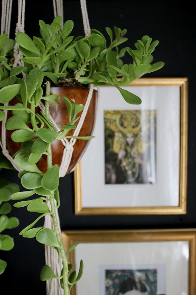 hanging succulent with black wall and framed prints