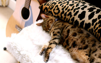 Pet Bed Roundup: 18 Cute Beds You Won't Mind Leaving Out