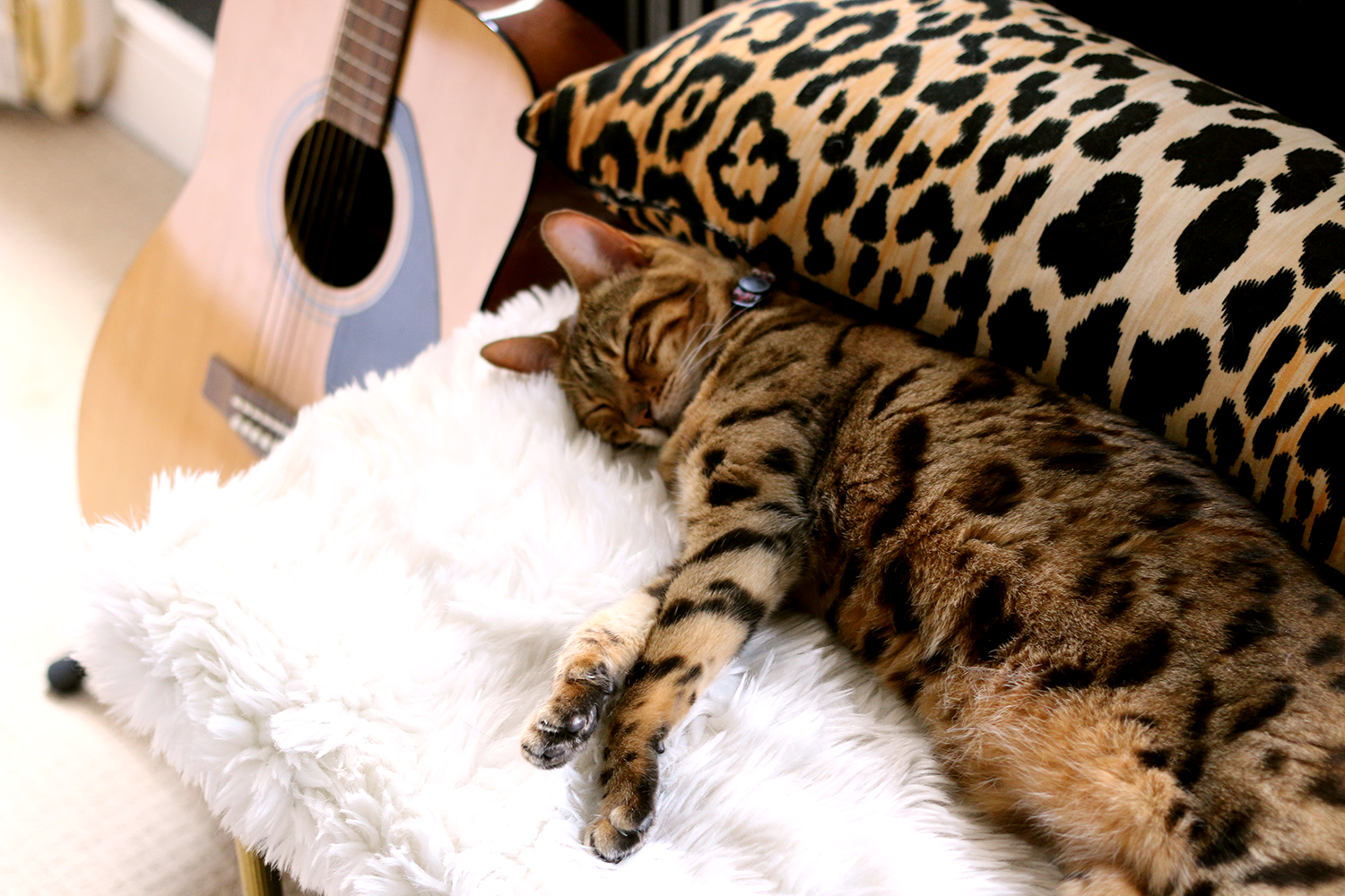 Pet Beds that aren't ugly