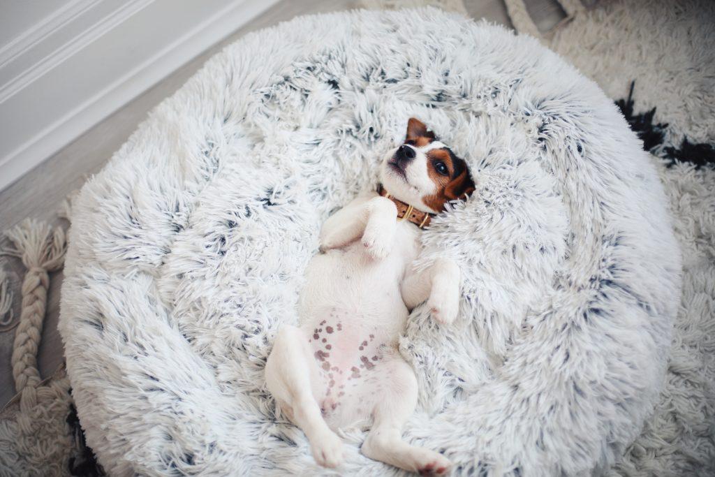Stephanie Sterjovski puppy bed