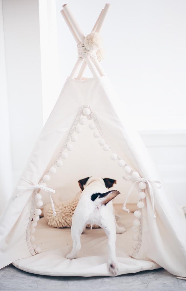 Stephanie Sterjovski puppy tent