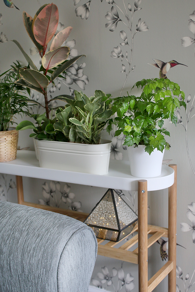 Ikea Satsumas Plant Stand - contemporary romantic living room before and after