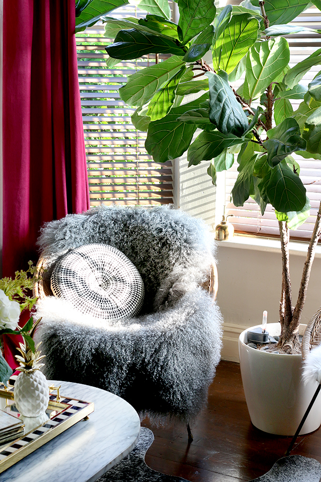 vintage rattan hoop chair with grey mongolian sheep skin throw and fiddle leaf fig
