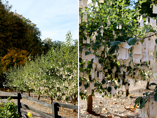 Wanas Park Yoko Ono Wish Tree Sweden