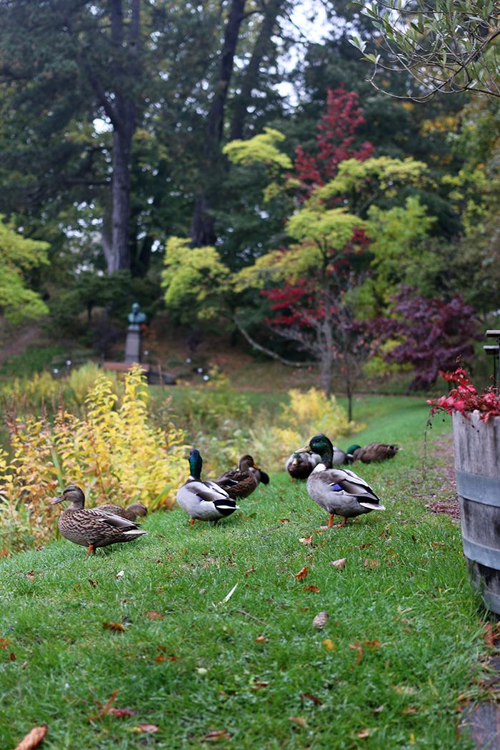 Botanical Gardens Lund