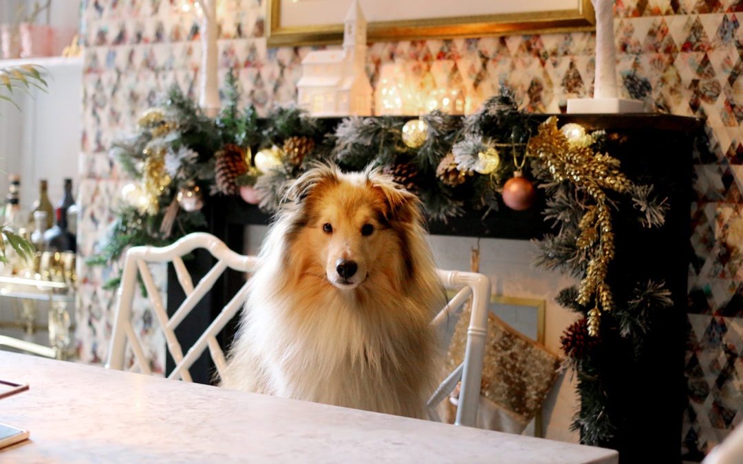 12 Ways to Prepare Your Dog for Christmas