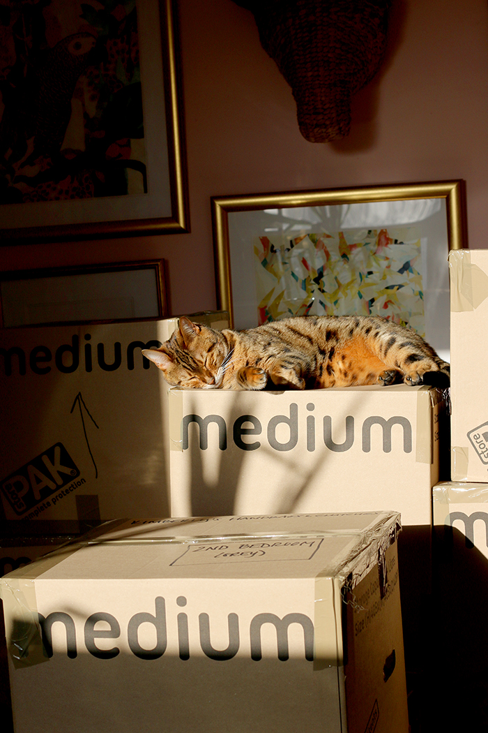 Bengal cat asleep on moving boxes - www.swoonworthy.co.uk