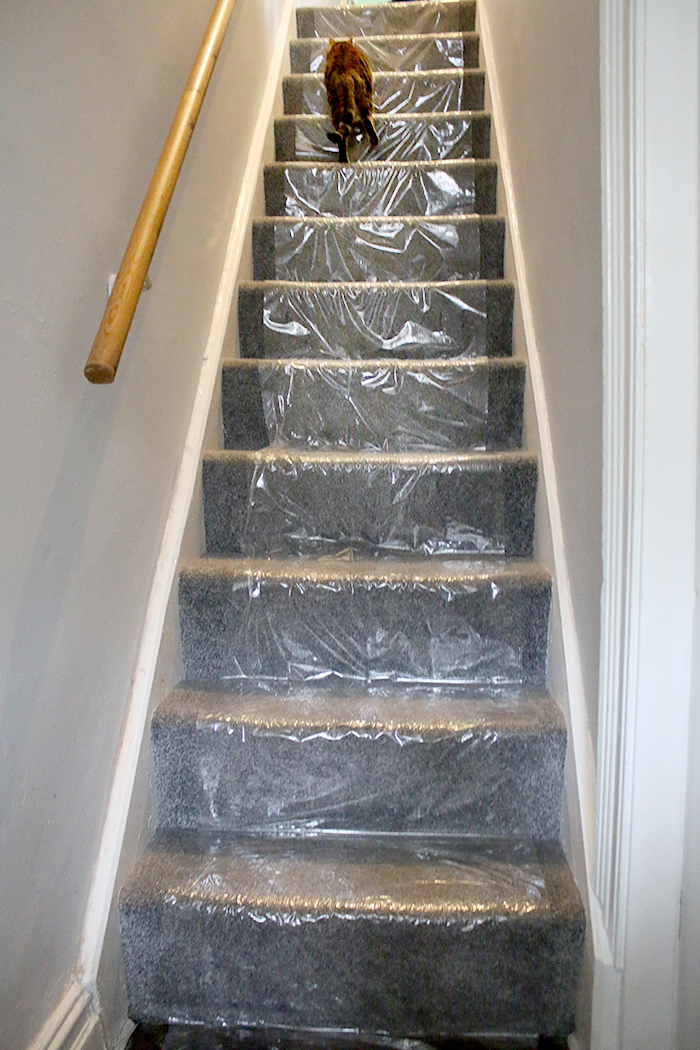 Plastic protective sheeting on stair carpeting