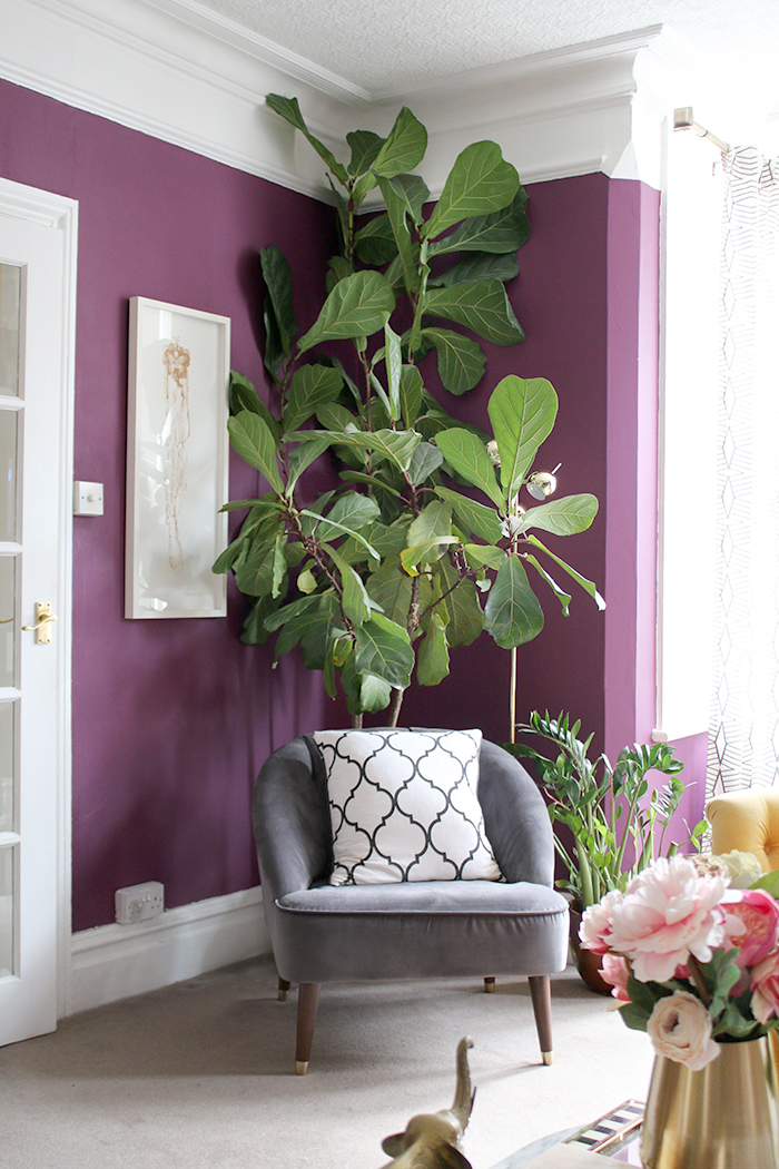 grey chair in purple living room with fiddle leaf fig