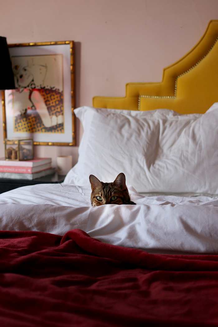 Cat in bed blush pink room with gold velvet headboard