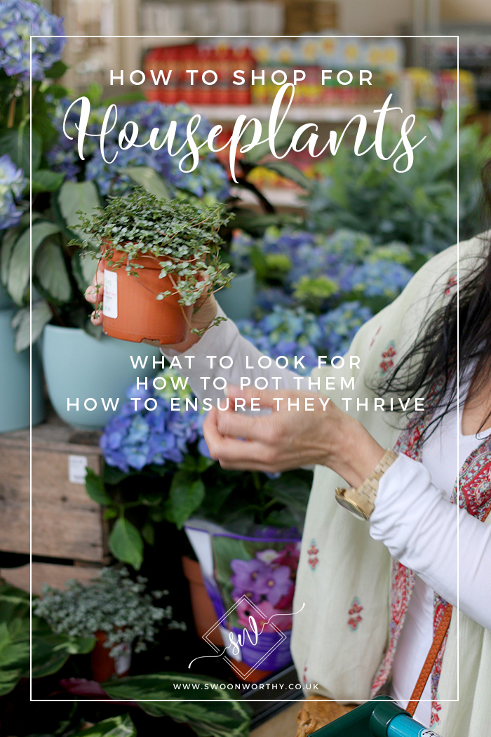 How to Shop for Houseplants - What to Look For, How to Pot Them and How to Ensure they Thrive