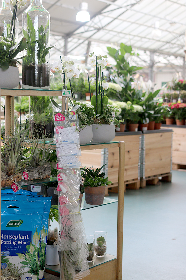 What to Look For When Shopping for Plants in a Garden Centre