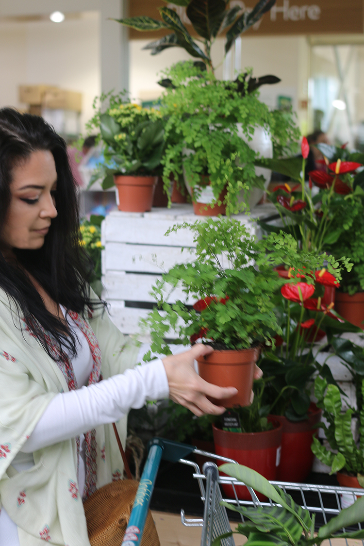 Where to Shop for Plants in the UK - Shopping at the Garden Centre