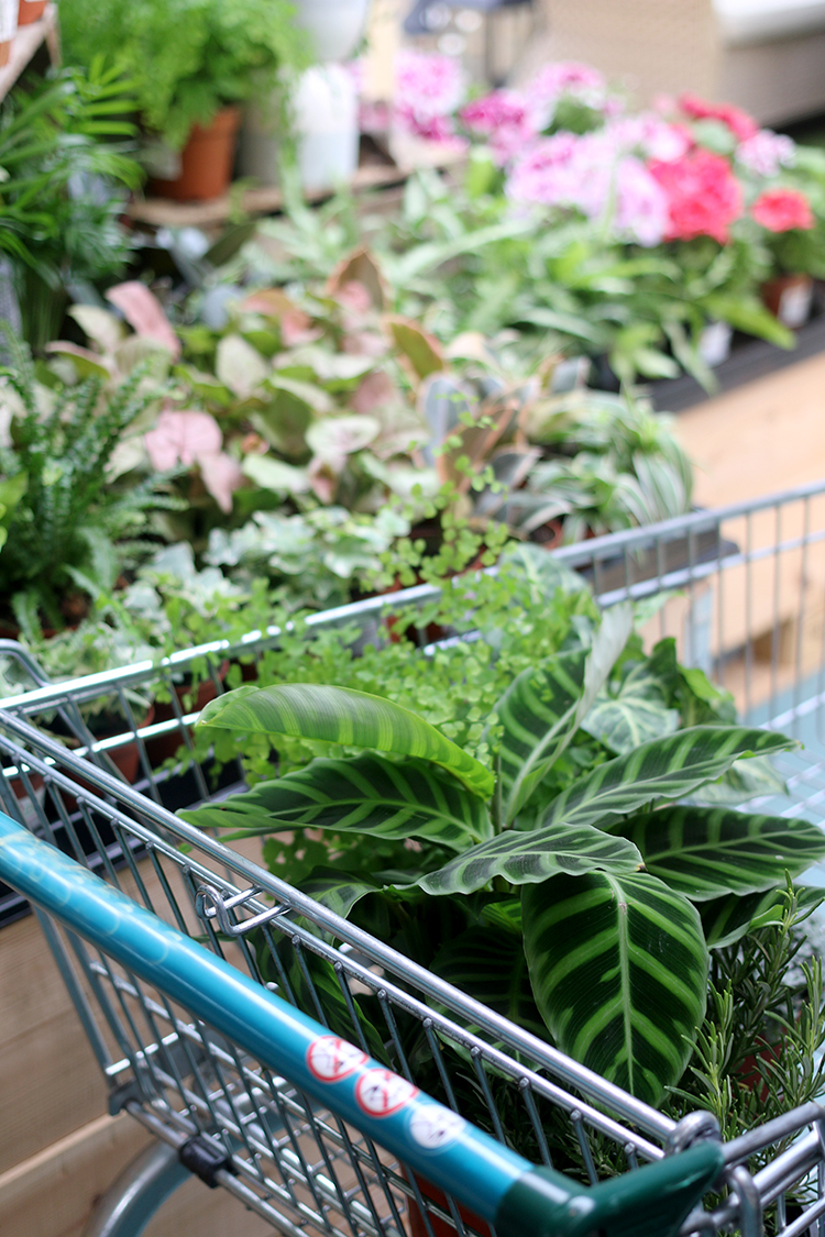 Shopping for houseplants - shopping cart filled with plants