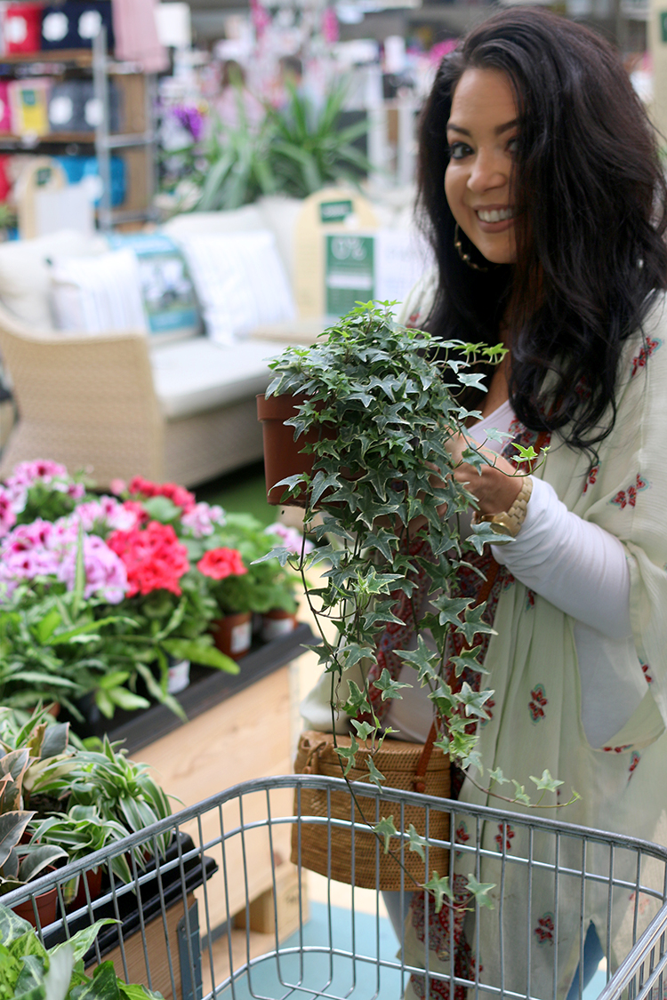 How to Shop for Houseplants