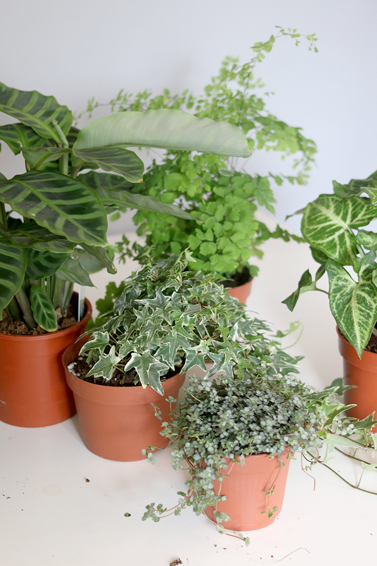 How I choose houseplants